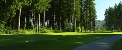 Fairway van het Golf van Golfing de Weg van Bomen Stock Foto's
