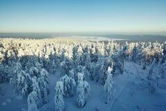 Fairy ландшафт зимы с снегом покрыл деревья Стоковое Изображение