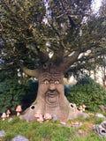 fairy вал Фантастическое огромное дерево которое говорит сказки Стоковое фото RF
