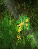 fairy зеленый цвет Стоковая Фотография