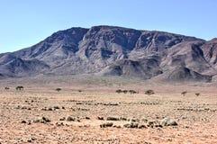 Fairy круги - Намибия стоковые изображения
