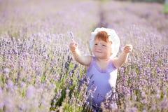 fairy лаванда Стоковое фото RF
