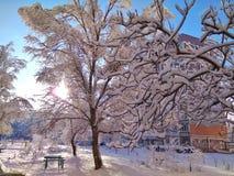 Fairy ландшафт зимы Стоковые Изображения RF