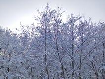 Fairy ландшафт зимы Стоковые Изображения