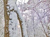 Fairy ландшафт зимы Стоковые Фото