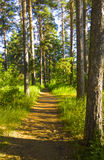Fairy лесные деревья и torpid Волшебная чаща Стоковые Изображения RF