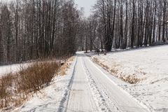 Fairy лес зимы в снеге зима времени снежка цветка Тяжелое падение снега зимы Деревья зимы в снежке Красивый ландшафт зимы с sn Стоковая Фотография