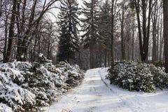 Fairy лес зимы в снеге зима времени снежка цветка Тяжелое падение снега зимы Деревья зимы в снежке Красивый ландшафт зимы с sn Стоковые Изображения