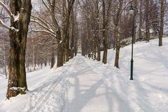 Fairy лес зимы в снеге зима времени снежка цветка Тяжелое падение снега зимы Деревья зимы в снежке Красивый ландшафт зимы с sn Стоковое Изображение RF