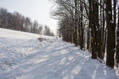 Fairy лес зимы в снеге зима времени снежка цветка Тяжелое падение снега зимы Деревья зимы в снежке Красивый ландшафт зимы с sn Стоковые Изображения RF