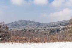 Fairy лес зимы в снеге зима времени снежка цветка Тяжелое падение снега зимы Деревья зимы в снежке Красивый ландшафт зимы с sn Стоковые Фото