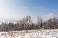 Fairy лес зимы в снеге зима времени снежка цветка Тяжелое падение снега зимы Деревья зимы в снежке Красивый ландшафт зимы с sn Стоковое Изображение