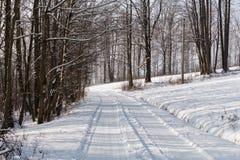 Fairy лес зимы в снеге зима времени снежка цветка Тяжелое падение снега зимы Деревья зимы в снежке Красивый ландшафт зимы с sn Стоковые Фотографии RF