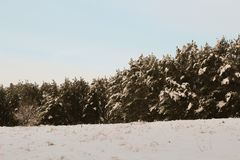 Fairy лес зимы в снеге зима времени снежка цветка Стоковые Фотографии RF