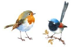 Fairy нарисованная рука иллюстрации акварели птиц крапивниковые и Робина установленная Стоковые Изображения