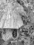 fairy дом Стоковые Изображения