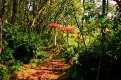 fairy пуща Стоковая Фотография RF
