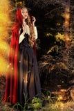 fairy пуща Стоковая Фотография