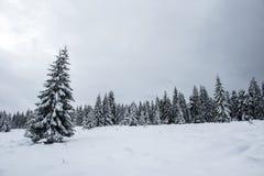 Fairy снежный ландшафт рождества зимы стоковое изображение rf