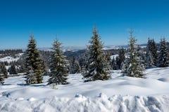Fairy снежный ландшафт рождества зимы стоковые изображения
