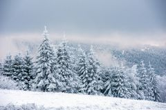 Fairy снежный ландшафт рождества зимы стоковое фото