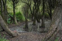 Fairy страшный лес Стоковые Изображения RF