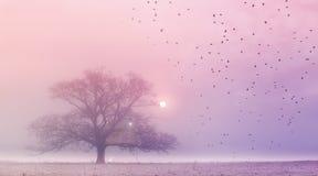 fairy хата Стоковые Фото