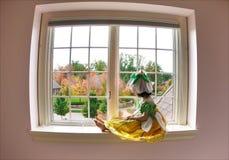 fairy цветок Стоковые Фотографии RF