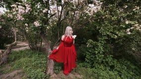 Fairy эльф женщины сток-видео