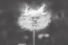 fairy Royalty-vrije Stock Fotografie