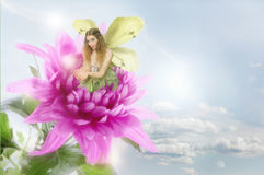 Fairy. Pretty fairy plays with light whilst sitting on a beautiful Dahlia flower Royalty Free Stock Images