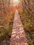 Fairy autumnal boardwalk in the wetlands Royalty Free Stock Photography