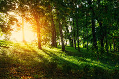 Fairy beautiful green forest at gold sunset Royalty Free Stock Photos