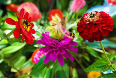 Fairy and Bumble Bees. A beautiful fairy and bumble bees with flowers Stock Photo