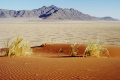 Fairy circles in desert, Namibia Royalty Free Stock Images