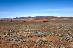 Fairy Circles - Namibia Royalty Free Stock Photo