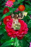 Fairy on Dahlia. Beautiful Fairy holding butterfly sitting in the center of a red dahlia Royalty Free Stock Photos