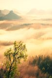 Fairy daybreak. Misty awakening in a beautiful hills. Peaks of hills are sticking out from foggy background Royalty Free Stock Photos
