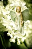 Fairy dell'elfo immagine stock