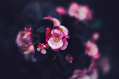fairy dreamy magic pink purple flowers on faded blurry background, toned with instagram filters in retro vintage style with film e Royalty Free Stock Image