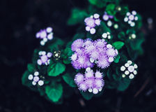 Fairy dreamy magic purple flowers with bright green leaves, toned with instagram filters in retro vintage style effect Stock Photo
