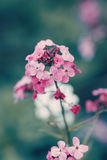 fairy dreamy magic red pink flowers with dark green blue leaves, blurry background, toned with instagram filter in retro vintage Royalty Free Stock Photos