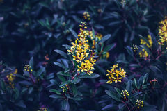 Fairy dreamy magic yellow flowers with dark green blue purple leaves background toned with instagram filters Stock Images