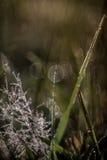 Fairy Dust stock photography