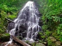Fairy Falls. Beautiful Fairy falls, featuring fairy creek flowing lush foliage over dark basalt stones Stock Image