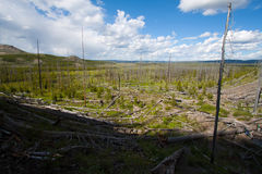 Fairy Falls dead forest in yellowstone, WY Stock Photos
