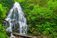 Fairy Falls, Oregon. Cute little waterfall in the middle of the woods of Oregon Stock Photos