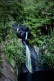 Fairy falls. In west Auckland NZ Royalty Free Stock Image