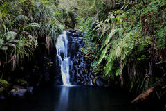 Fairy falls. In west Auckland NZ Stock Images