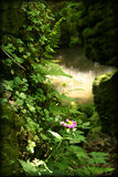 Fairy Fantasy Rainforest Woods Royalty Free Stock Photo